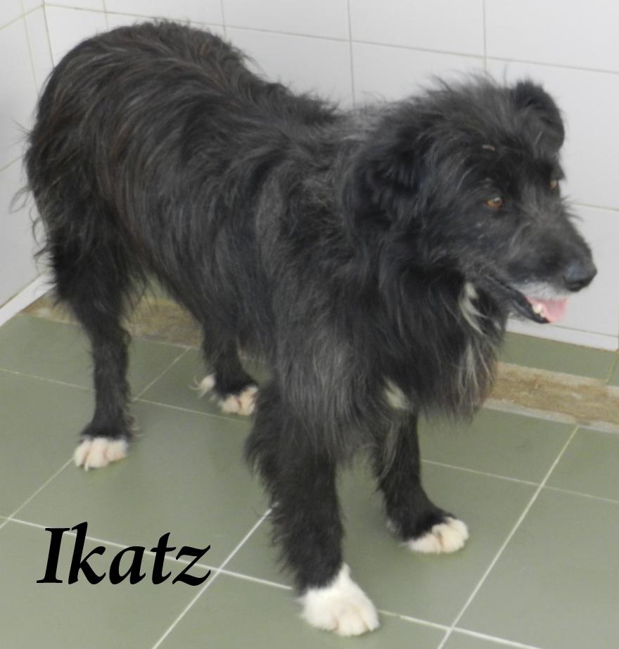 IKATZ