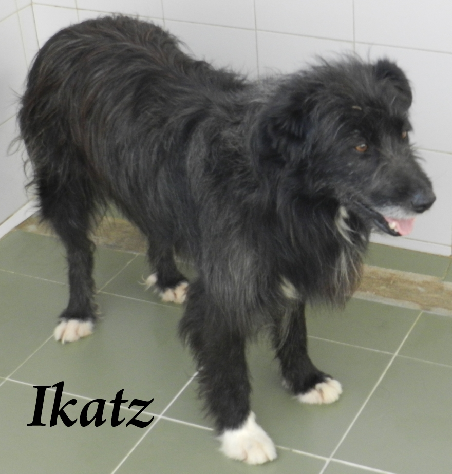 Ikatz – ADOPTADO