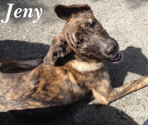 Jenny – Adoptada