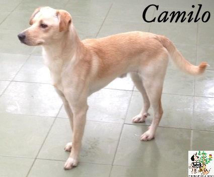 Camilo – ADOPTADO