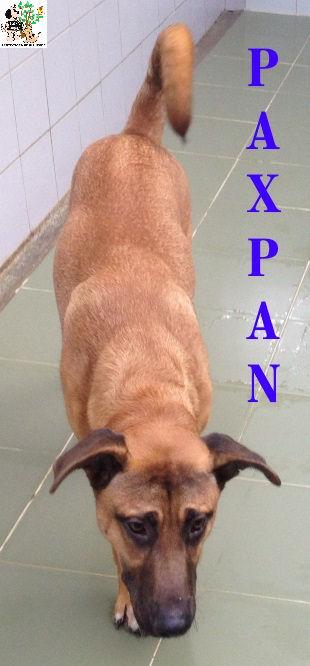 PAXPAN