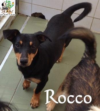 Rocco – ADOPTADO
