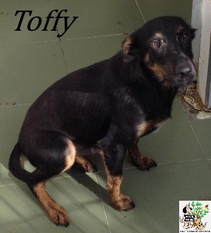 Toffy – ADOPTADO