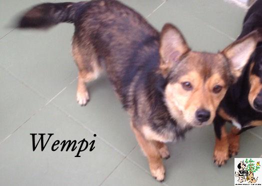 Wempi – ADOPTADO