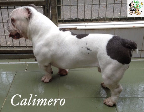 Calimero – ADOPTADO