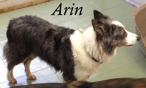 Arin – ADOPTADA
