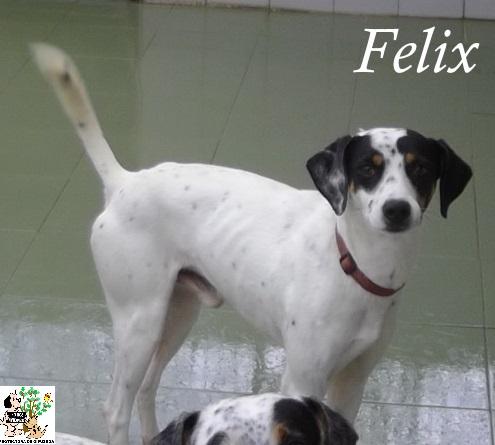 Felix – ADOPTADO