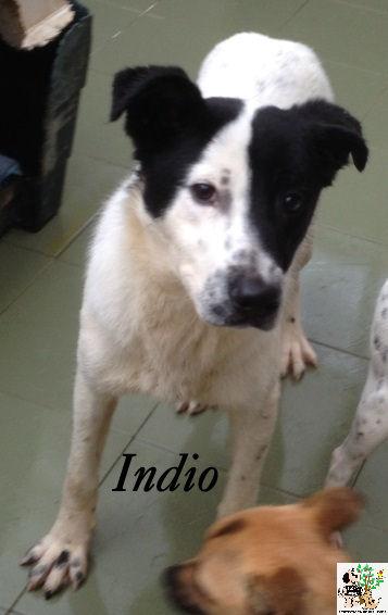 Indio – ADOPTADO