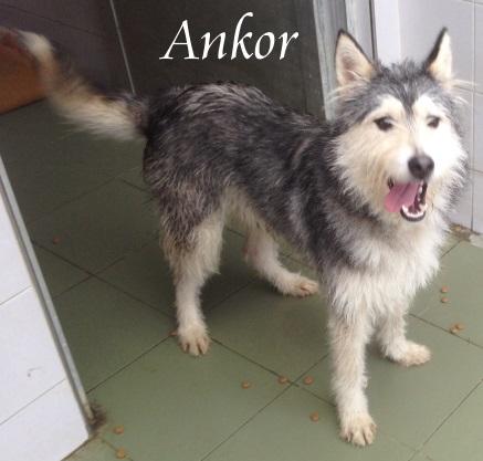 (Español) Ankor – ADOPTADO