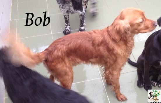 (Español) BOB