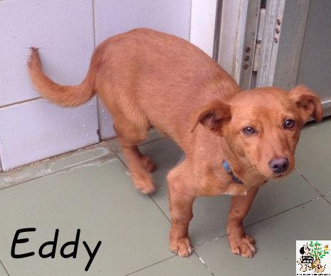 Eddy – ADOPTADO