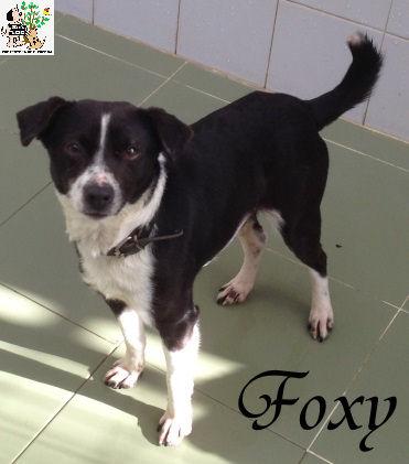 Foxy – ADOPTADO
