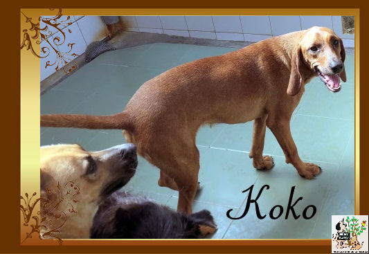 Koko – ADOPTADA