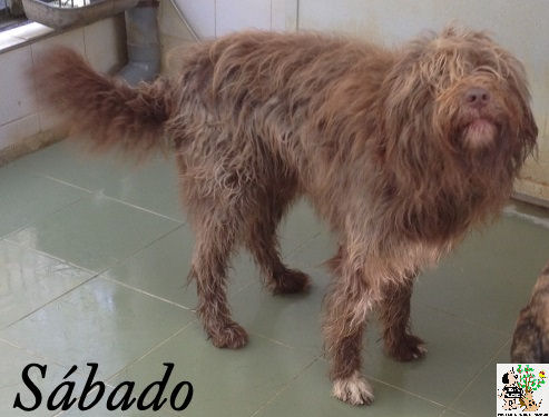 (Español) SABADO