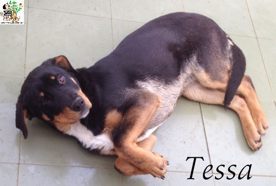 Tessa – ADOPTADA