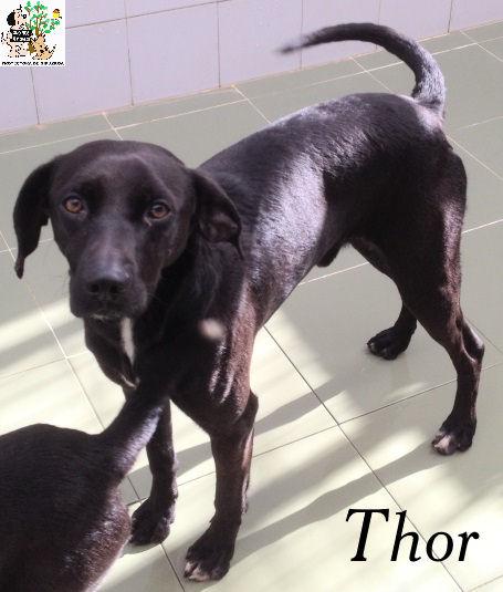 Thor – ADOPTADO