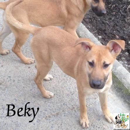 Beky – ADOPTADA