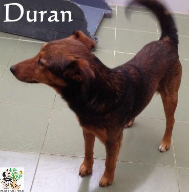 Duran – ADOPTADO