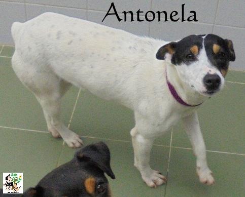 (Español) ANTONELA