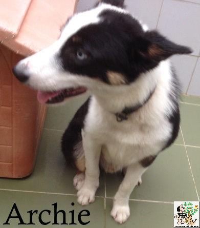 Archie – ADOPTADO