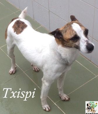 TXISPI