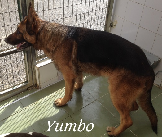 Yumbo – ADOPTADO