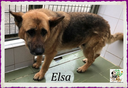 (Español) ELSA