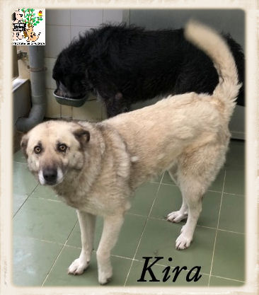 Kira – ADOPTADA