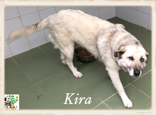 (Español) Kira – ADOPTADA