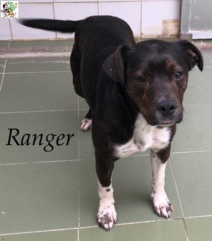 Ranger – ADOPTADO