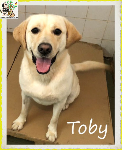 Toby – ADOPTADO