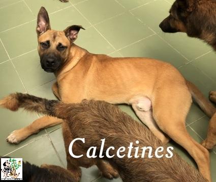 (Español) CALCETINES