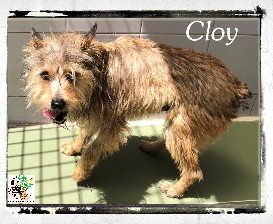 Cloy – ADOPTADO