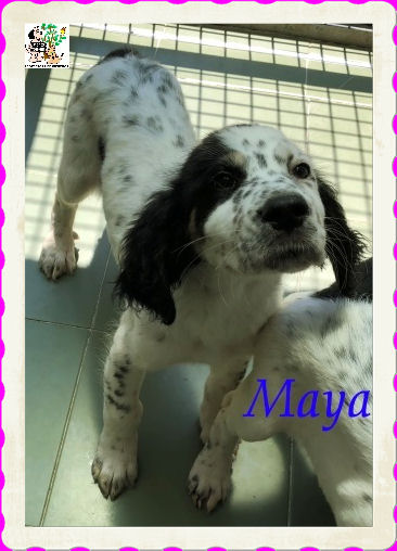 Maya – ADOPTADA