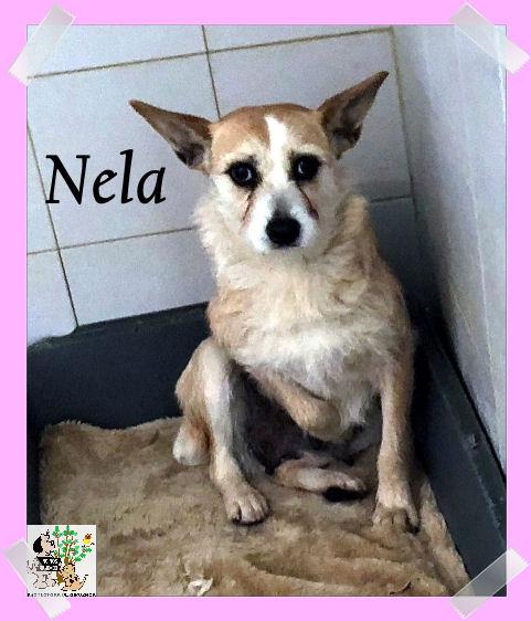 (Español) NELA
