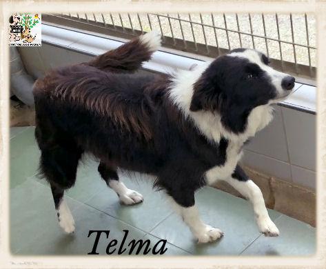 (Español) TELMA
