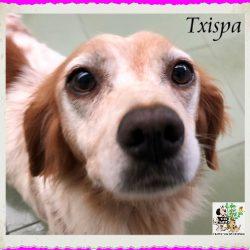 TXISPA