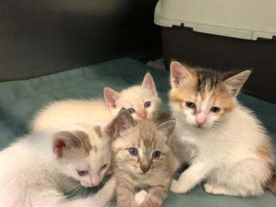 Gatos jóvenes