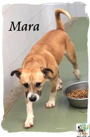 (Español) Mara – ADOPTADA