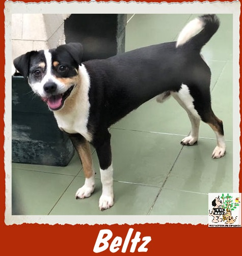 (Español) BELTZ