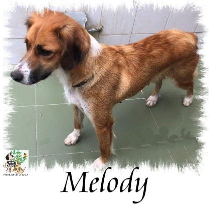 Melody – ADOPTADA