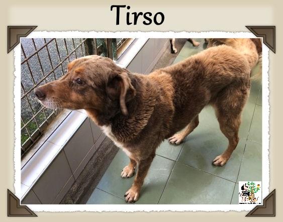 (Español) Tirso – ACOGIDO