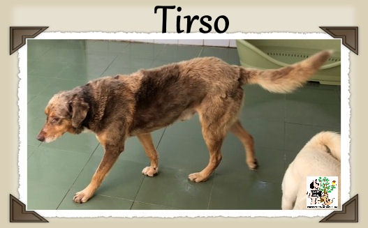 TIRSO
