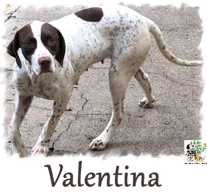 Valentina – ADOPTADA