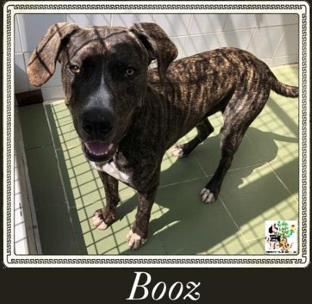 (Español) BOOZ