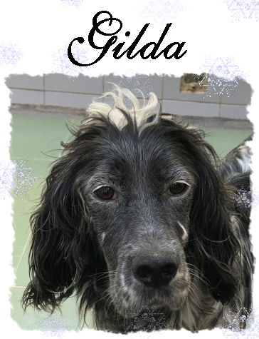 Gilda – ADOPTADA