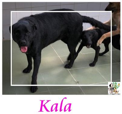 (Español) KALA