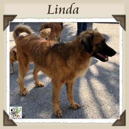 (Español) LINDA