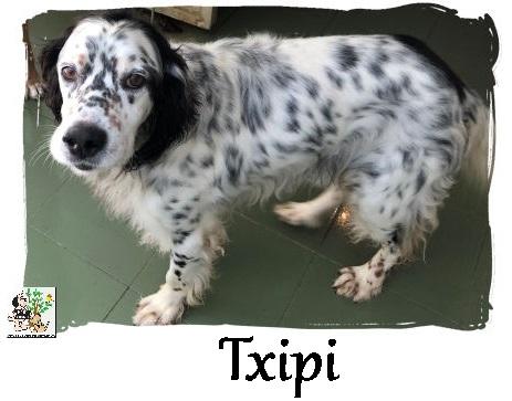 TXIPI