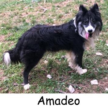 Amadeo – ADOPTADO